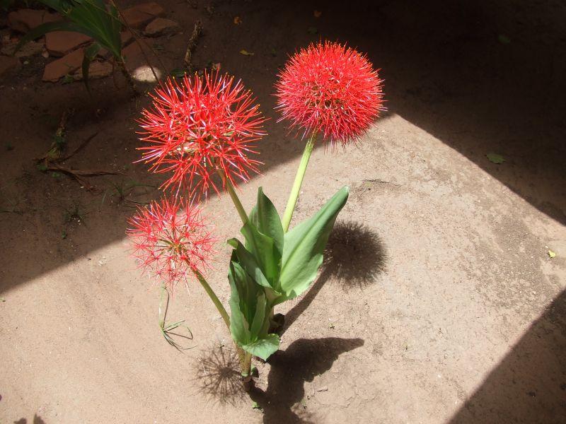fleurs047.jpg