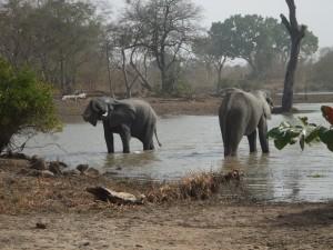 elephants-013-300x225